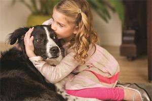 Praktische Hilfsmittel Für Die Epilepsie Beim Hund Mein Hund Hat