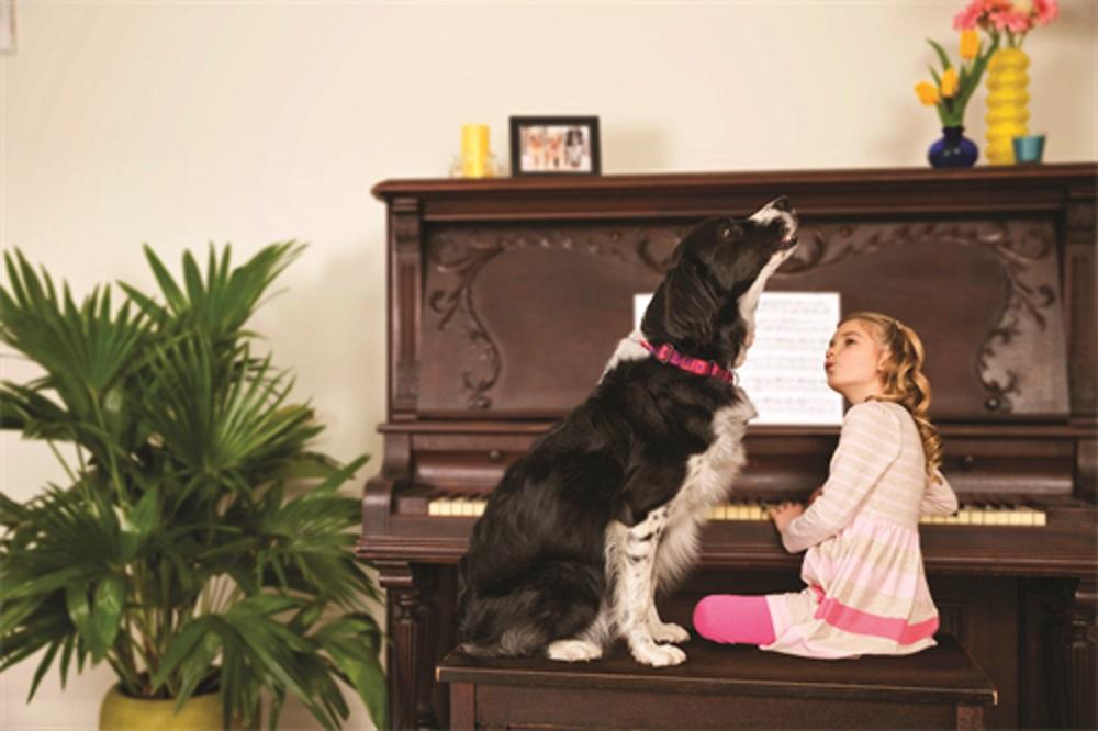 Verhaltenstipps Bei Epileptischen Anfällen Mein Hund Hat Epilepsie