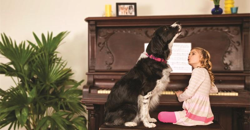 verhaltenstipps bei epileptischen anf llen mein hund hat epilepsie. Black Bedroom Furniture Sets. Home Design Ideas