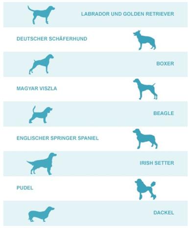 Epilepsie Beim Hund Die Zwei Arten Mein Hund Hat Epilepsie